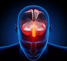 October 7th 2017 – The Human Brain: False Memories